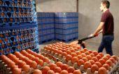 Περισσότερα από 28 εκατ. μολυσμένα αυγά έχουν εισαχθεί στη Γερμανία