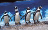 Πιγκουίνοι νικούν επένδυση 2,5 δισ. δολαρίων στη Χιλή