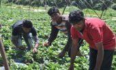 Έρευνα για την εκμετάλλευση των μεταναστών στη χώρα