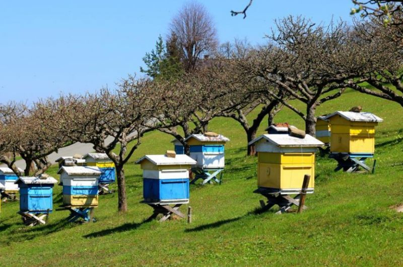 Μελισσοκομία: Ενισχύσεις ύψους 4,64 εκατ. ευρώ για την εφαρμογή δράσεων
