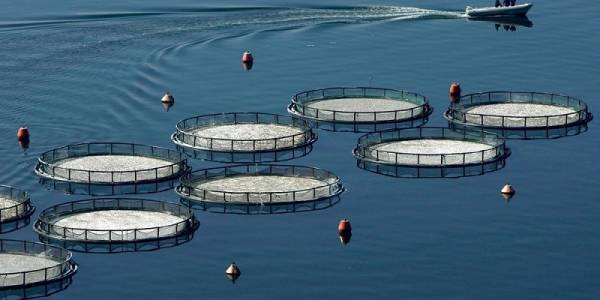 Συνεργασία Σελόντα – Lidl Hellas «εκτοξεύει» τις πωλήσεις ψαριών