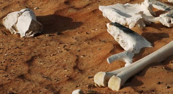 Πάνω από 6.000 πτώματα εντοπίστηκαν σε ομαδικούς τάφους στο Μπουρούντι