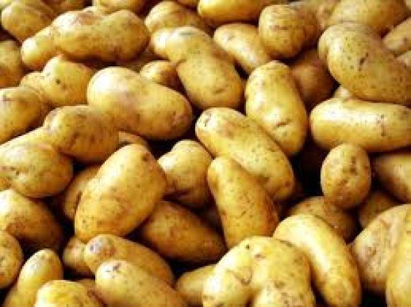 Stop στις παράνομες ελληνοποιήσεις πατάτας βάζει η ΕΑΣ Νάξου